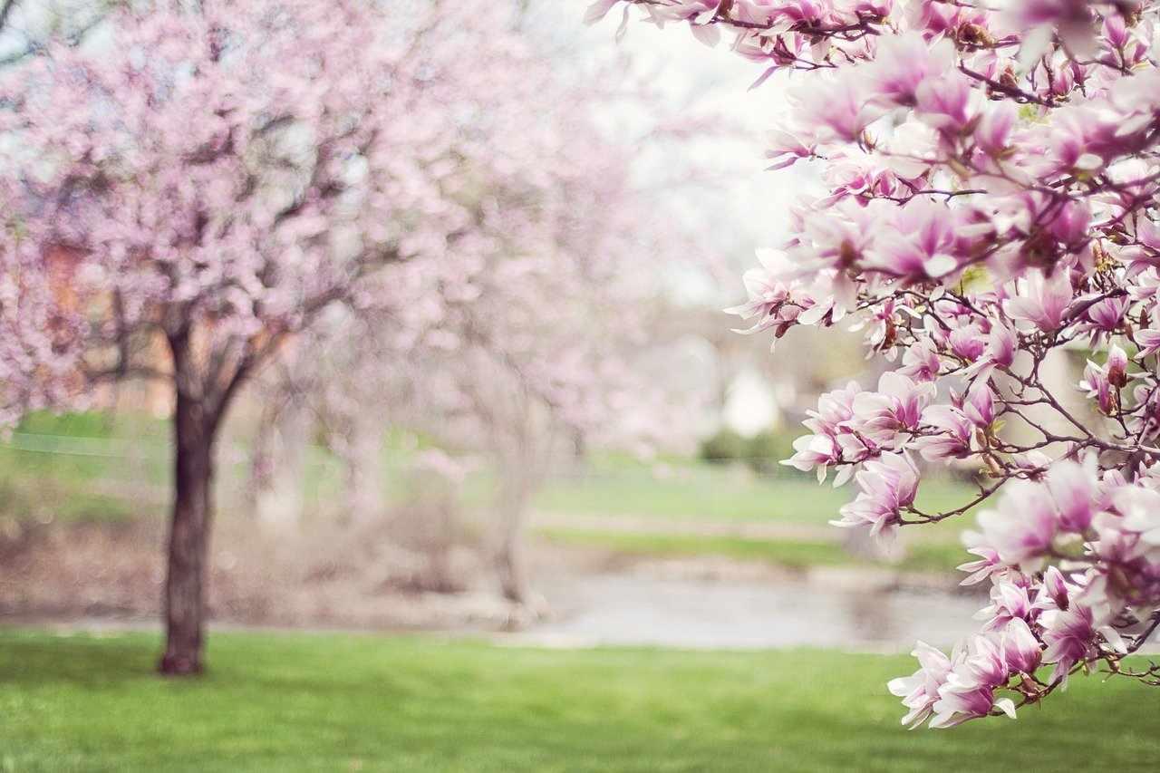 Весна повод для счастья