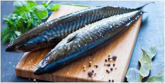 zhirnaja-ryba