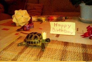 Черепаха в подарок