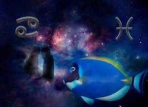 Отношения знаков зодиака Рыбы и Рак